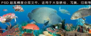 海底世界海鮮圖
