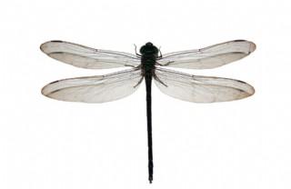 蜻蜓特寫圖片
